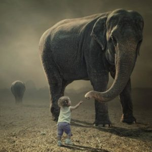 Az elefánt