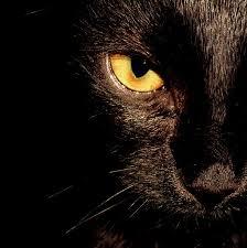 bastet macska, állatkínzás, bűnbocsánat